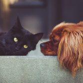 punture di zanzara malattie cani e gatti