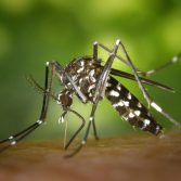 Five interesting facts about mosquitoes